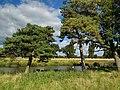 Charlecote park - panoramio (8).jpg
