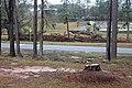 Chattahoochee Hurricane Michael damage trees.jpg