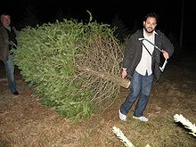 customers haul their own purchases off site at choose and cut farms - Christmas Tree Farming