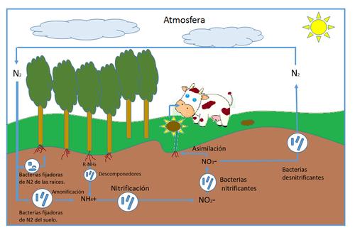 el fosforo en las plantas yahoo dating