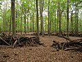 Circle-Barrier in the Hambach forest 01.jpg
