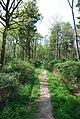 Climbing Duncliffe Hill - geograph.org.uk - 410860.jpg