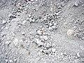 Coccinella sull' ETNA - panoramio.jpg