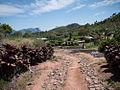 Coffee County in Jinotega Department, Nicaragua.jpg