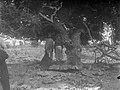 Collectie Nationaal Museum van Wereldculturen TM-10021499 Kolenbranders poseren onder een Guajacum boom op Klein Bonaire Bonaire fotograaf niet bekend.jpg
