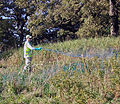 CollegePark invasives treatment - Flickr - USDAgov.jpg