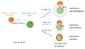 Collisions de noyaux atomiques selon le paramètre d'impact.png