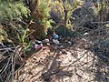 Colorado River Edge near Cibola Arizona- trash left by campers and homeless.jpg