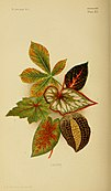 Colouration in animals and plants (1886) (14776798275).jpg