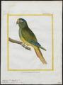 Conurus aureus - 1700-1880 - Print - Iconographia Zoologica - Special Collections University of Amsterdam - UBA01 IZ18500175.tif