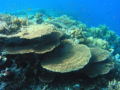 Coral Reef in the Red Sea.JPG