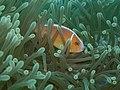 Coralreeflife.jpg