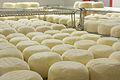 Cowgirl Creamery Point Reyes - Racks of cheese resting.jpg