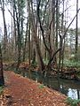 Creek with trees at Fallon Park in Raleigh, North Carolina.jpg