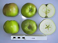 Cross section of Evagil, National Fruit Collection (acc. 1945-191).jpg