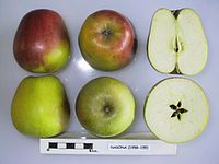 Cross section of Nasona, National Fruit Collection (acc. 1958-155).jpg
