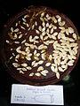 """Cucurbita pepo """"zapallo de Angola"""" semillería La Paulita - fruto cortado (AM13) - sector 1 foto 3.JPG"""