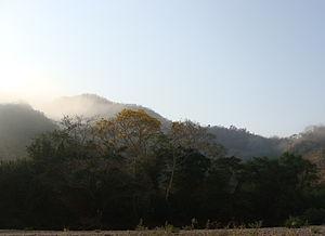 Chamela-Cuixmala Biosphere Reserve - Riparian forest along the Cuixmala River