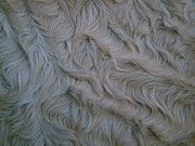 Closeup of Curly Coat in Winter