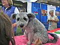 Cute Pumi puppy (8109933292).jpg