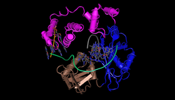 DNA polymerase lambda.png