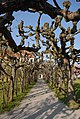 Dachau Schloss Lindengalerie.JPG