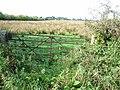 Damp pasture, near Kirkcambeck - geograph.org.uk - 241077.jpg