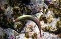 Danse sous-marine.jpg