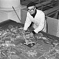 De heer Jacobs, tijdens restauratie wapenbord - Batenburg - 20028409 - RCE.jpg