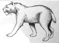 De vroeg-pleistocene sabeltandkat, Homotherium crenatidens (2008) Homotherium crenatidens.png