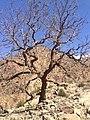 Dead Tree in The Mountain.jpg