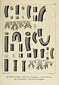 Description des mollusques fossiles qui se trouvent dans les grès verts des environs de Genève (9525371920).jpg