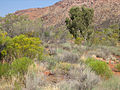 Desert grass & bush 02.jpg