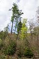 Detmold - 2014-04-13 - Oberer Ochsentalweg (19).jpg
