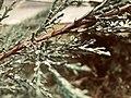 Dewy flower.jpg