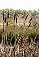 Diakonievene. Natuurgebied van It Fryske Gea 014.jpg