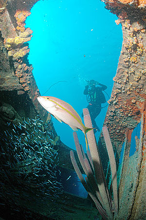 Wreck diving - Diver at the wreck of the Hilma Hooker, Netherlands Antilles.