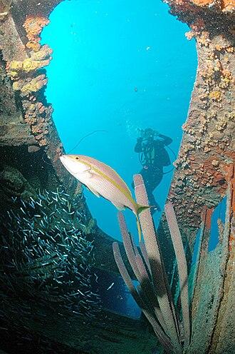 Wreck diving - Diver at the wreck of the Hilma Hooker, Netherlands Antilles.