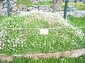 Dodona-Greece-April-2008-106.JPG
