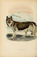 Dogs, jackals, wolves, and foxes- a monograph of the Canidae. With woodcuts, and 45 coloured plates drawn from nature by J.G. Keulemans and hand-coloured (1890) (20996732841).jpg