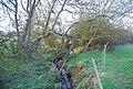 Dollis Brook by the Dollis Valley Greenwalk - geograph.org.uk - 2365839.jpg