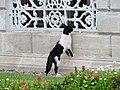 Dolmabahçe Palace - Beşiktaş - Istanbul, Turkey (10583188554).jpg