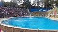 Dolphin discovery - panoramio.jpg