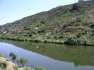 Douro-river-oliv.jpg