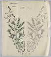 Drawing, Designs for embroidery, ca. 1890 (CH 18446695).jpg