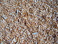 Dried shrimps - Thailand.JPG