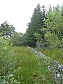 Dry stone wall at edge of forest - geograph.org.uk - 1439497.jpg