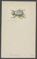 Dynastes - Print - Iconographia Zoologica - Special Collections University of Amsterdam - UBAINV0274 001 06 0034.tif