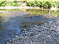 Eagle Creek, Bonnie Lure State Recreation Area.jpg