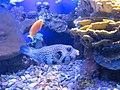 Eilat Coral World Underwater Observatory 15.jpg